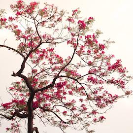 A Riot of Colors by Avanish Dureha - Nature Up Close Trees & Bushes ( dpc, historic delhi, new delhi, dureha@gmail.com, incredible india, india, avanish dureha )
