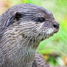 by John Phielix - Animals Other Mammals