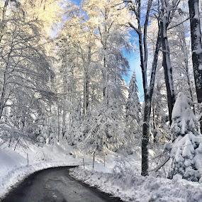Winter fairytale by Ivana Tilosanec - Landscapes Forests ( naturelovers, road, travel, landscape, nature photo, natures, nature art, winter, tree, nature, natureza, snow, trees, nature photography, natureporn,  )