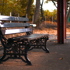 Park bench by Adam Lang - Artistic Objects Furniture ( chair, bench, autumn, seat, park bench )