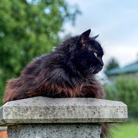 kočka IIa.jpg