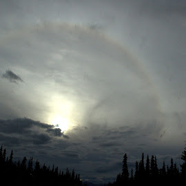 Sun Dog by Rebecca Weatherford - Landscapes Weather ( clouds, skyline, silhouette, alaska, trees, weather )