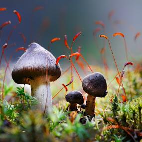 Tiny world by Cvetka Zavernik - Nature Up Close Mushrooms & Fungi ( nature, forest floor, mushrooms )