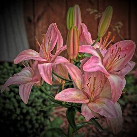 Digital Art Lilies  by Darrell Tenpenny - Digital Art Things