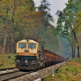 Destination by Uttam Das - Transportation Trains ( jungle, trees, train, transportation, landscape,  )