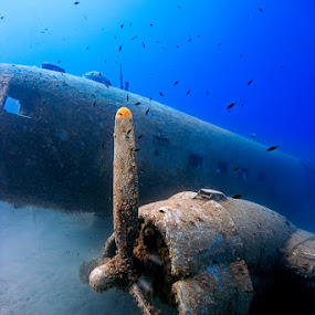 Airplane Wreck Underwater by Rico Besserdich - Transportation Airplanes ( dakota, underwater, airplane, wreck, c47, sea, ocean, diving )