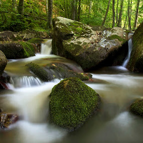 by Siniša Almaši - Nature Up Close Water ( forest, nature, cascade, woods, natural light, water, trees, colors, moss, view, stream, light, shadows, stones, river )
