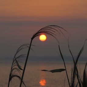 eye sunrise by Yahia  husain - Landscapes Sunsets & Sunrises ( beautiful, beauty, sunrise, landscape, eye )
