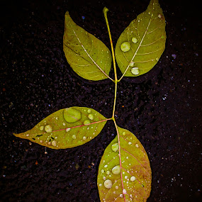 Wet by Even Steven - Nature Up Close Leaves & Grasses ( water, fall leaves on ground, fall leaves, asphalt, colors, art, wet, leaf, leaves, droplets )