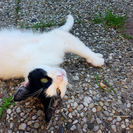 Pooky by Redski Rooie - Animals - Cats Playing ( outdoor, cat, animal, enjoy, black and white, eyes,  )
