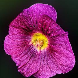 J2 by Abdul Rehman - Flowers Single Flower ( beautful, natural light, nature, beauty, natural, mother nature )