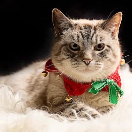 by ILOVE Photography - Public Holidays Christmas ( pwc84, #GARYFONGPETS, #SHOWUSYOURPETS )