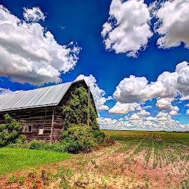 Barn in a bean Field by Derrill Grabenstein - Landscapes Prairies, Meadows & Fields ( bean field, barn, ivy covered, crops, architecture, landscape )