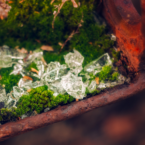 broken glass among moss.jpg