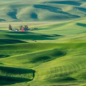 Red Barn from Steptoe Butte by Gordon Banks - Landscapes Prairies, Meadows & Fields ( palouse, barn, landscape, fields )