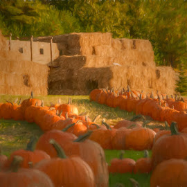 Pumpkin Land by Chris Cavallo - Public Holidays Halloween ( maine, autumn, fall, hay, pumpkins, fort, halloween )