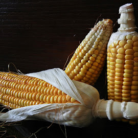 Maize cobs 2 by Pradeep Kumar - Food & Drink Fruits & Vegetables