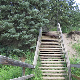 This way up by Rose McAllister - City,  Street & Park  City Parks ( stairs, nature, green, landscape, woods )