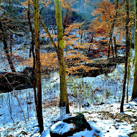 Early Snow, Late Fall by Tim Hall - Landscapes Forests