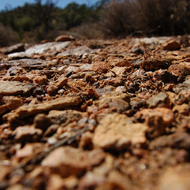 If I were a bug... by Savannah Eubanks - Nature Up Close Rock & Stone ( pebbles, stones )