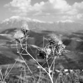 by Arber Shkurti - Novices Only Landscapes ( #albania )