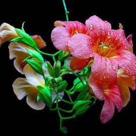 Wild beauty  by Asif Bora - Flowers Flowers in the Wild
