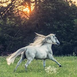 by Kelley Hurwitz Ahr - Animals Horses