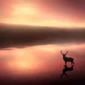 Tranquil Dawn by Jennifer Woodward - Digital Art Places ( water, animals, waterscape, sunset, silhouette, wildlife, sunrise, stag, landscape, deer )
