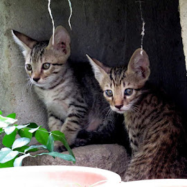 by Ranjan Bhai - Animals - Cats Kittens