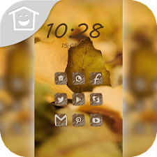 Yellow ginkgo leaves theme