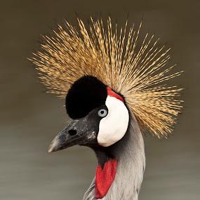 by Gad Fogiel - Animals Birds ( bird, nature, color, israel, birds )