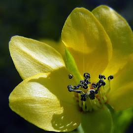 Good morning! by Pradeep Kumar - Flowers Single Flower