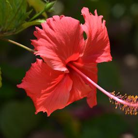 by Parasu Raman - Nature Up Close Flowers - 2011-2013
