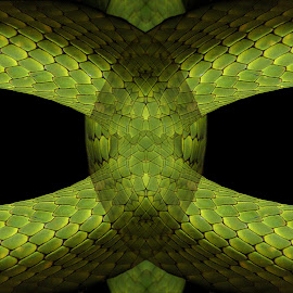 Skin Tight by Shawn Thomas - Abstract Patterns ( abstract, snake, pattern, scales, green, skin )