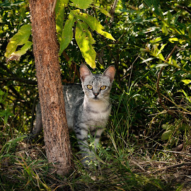 Curiosity by Andrija Vrcan - Animals - Cats Portraits ( cat )