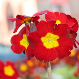 Spring in Liverpool by Zivile Reingardt - Nature Up Close Gardens & Produce (  )