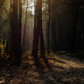 by Cassandra G - Landscapes Forests ( wood, trees, forest, leaves, shadows )