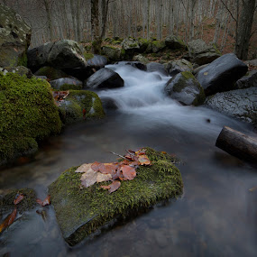 Dardagna's falls by Cenci Simone - Landscapes Forests ( water, red, tree, movement, falls, image, rock, forest, leaves, photo )