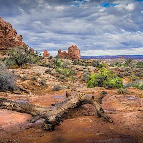 Desert Scene by Ed & Cindy Esposito - Landscapes Deserts ( monuments, desert, sky, arches national park, blue, empty, rocks, alone )