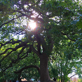 Sun Peeks Through Tree in Graveyard by Kristine Nicholas - Novices Only Landscapes ( red, tree, graves, green, cemetary, trees, grave, historic, iphone 6s photos,  )
