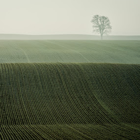 Field of Dreams by William Ducklow - Landscapes Prairies, Meadows & Fields