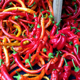 Red Hot Peppers by MaryKathryn Zuza - Food & Drink Fruits & Vegetables ( peppers, red, farmers market, spicy, yellow, vegetable, hot peppers )