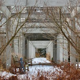 Arboretum by Joel Kreger - Buildings & Architecture Architectural Detail ( winter, pattern, snow, arbor, perspective, arboretum )
