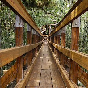 canopy walkway by Sandra Cannon - Landscapes Forests