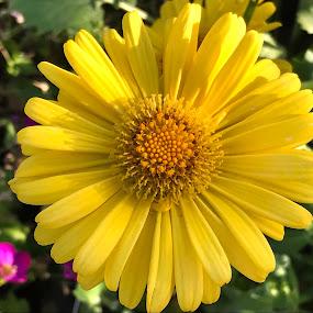 Flowers in the garden by Alesanko Rodriguez - Flowers Flower Gardens ( spring, flowers, beauty, botanical, nature, plant, season, garden )
