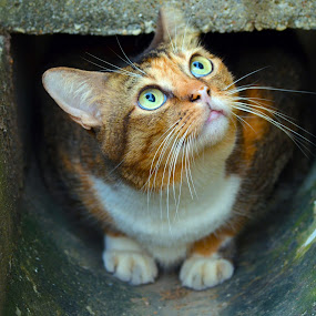 Look up by Kelvin Đào - Animals - Cats Portraits ( cat, look up, lie, concrete, eyes )