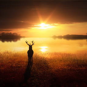Dawn's Golden Light by Jennifer Woodward - Digital Art Places ( water, animals, dawn, nature, sunset, wildlife, scenery, sunrise, landscape, stag, dusk, deer )