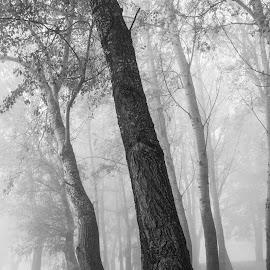 Fog4 by Josip Ćutunić - Nature Up Close Trees & Bushes ( wild, wood, tree, nature, fog )