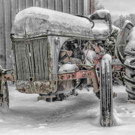 Snowy Tractor by Sandi Phillips Miller - Transportation Other ( old, frigid, motor, tires, snow, snowy, ford, antique, tractor )