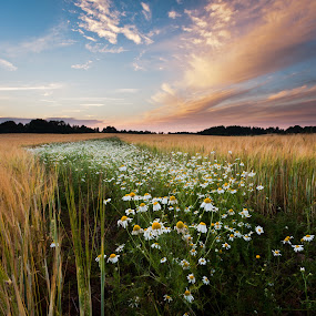 summer time by Eriks Zilbalodis - Landscapes Prairies, Meadows & Fields ( clouds, sunset, daisies, meadows, square, landscapes, evening )
